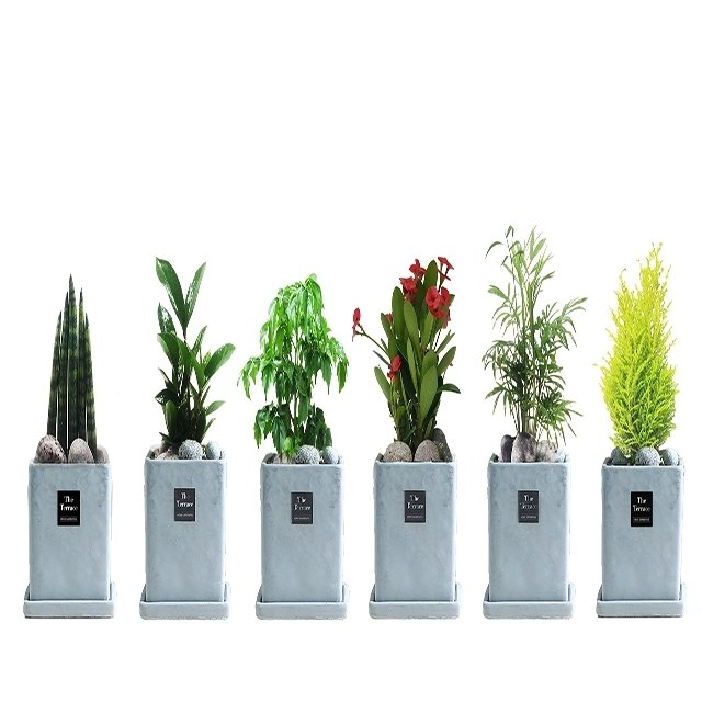 인테리어 공기정화식물 6종
