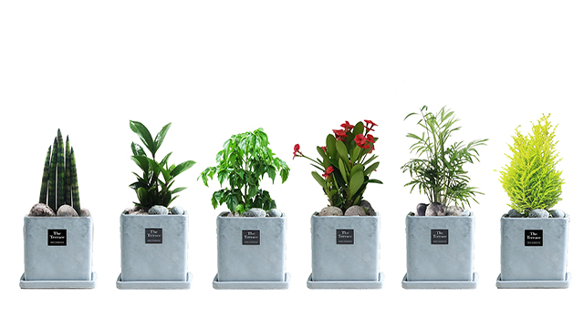 인테리어 공기정화식물 [단품]